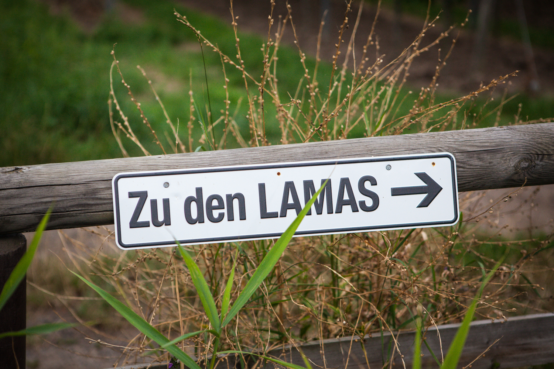 Großartigkeiten der Woche inklusive Lamawandern
